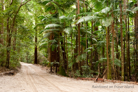 Visit fraser Island by 4wd with Brisbane to Beach 4wd hire